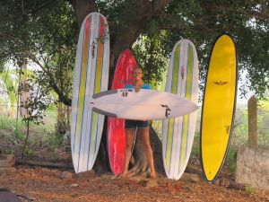home new boards